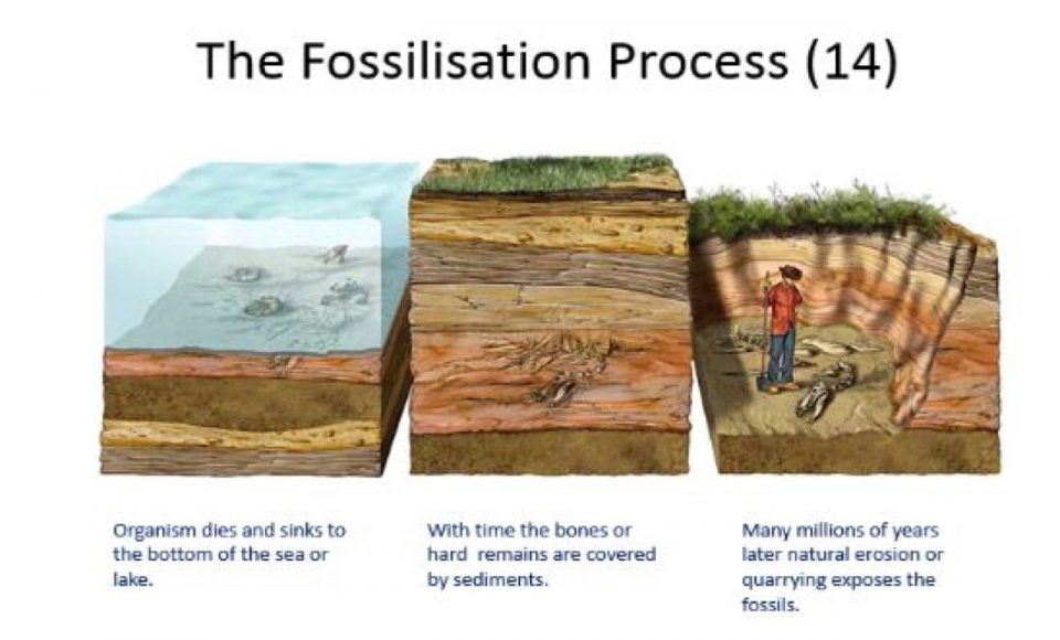 Fossils-Learning-Cafe-2